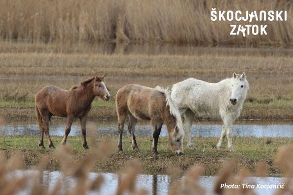Brin, Aco in teta Falisca, foto: Tina Kocjančič